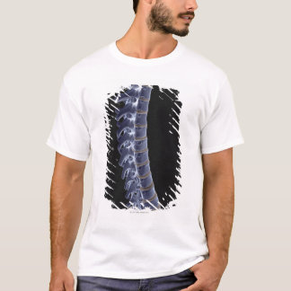 The Vertebral Column 3 T-Shirt
