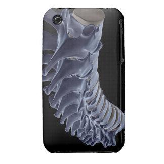 The Vertebral Column iPhone 3 Case-Mate Cases