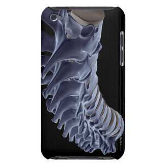 The Vertebral Column iPod Touch Covers
