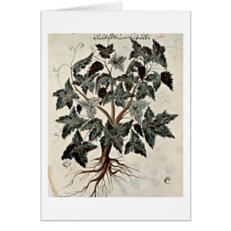 The Vine By Arab Painters Of The Herbal Book Greeting Cards