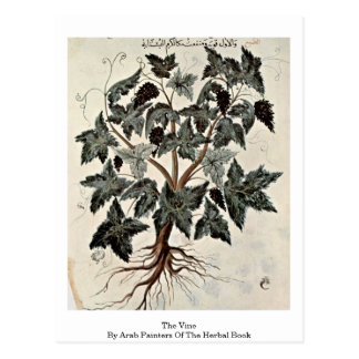 The Vine By Arab Painters Of The Herbal Book Postcard