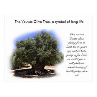 The Vouves Olive Tree, symbol of long life... Postcard