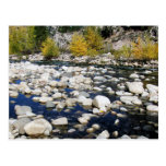 The Walker River in Autumn Postcard