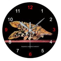 The wall-mounted clock of Polypterus endlicheri