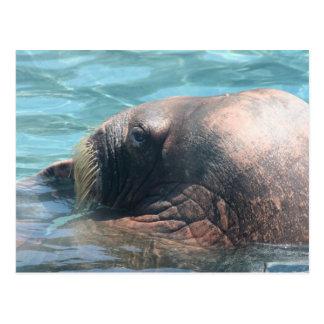 The Walrus Postcard