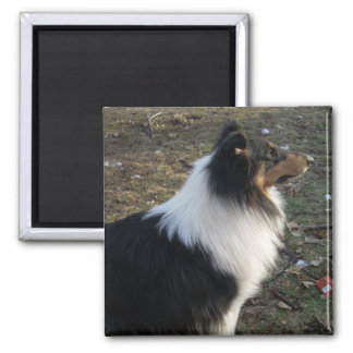 The Watchful Collie 2 Inch Square Magnet