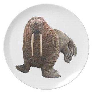 THE WATCHFUL WALRUS PLATES