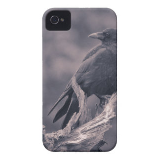 The watching Crow iPhone 4 Cover