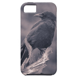 The watching Crow iPhone 5 Case