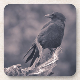 The watching Crow Beverage Coasters