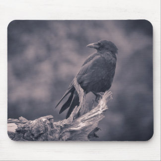 The watching Crow Mouse Mats