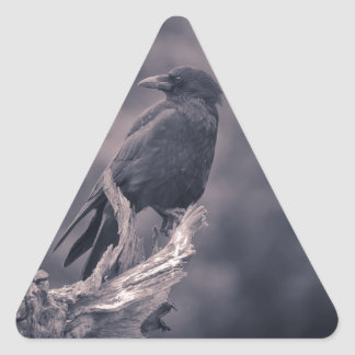 The watching Crow Triangle Sticker