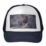 The watching Crow Trucker Hats