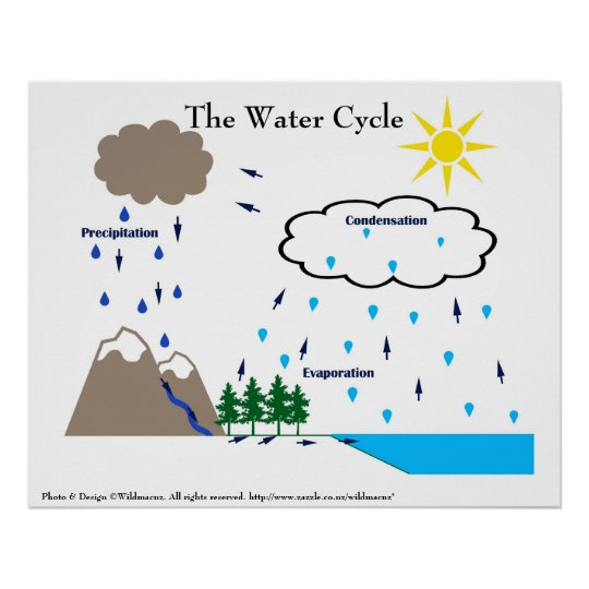 The water cycle poster zazzle the water cycle poster ccuart Gallery