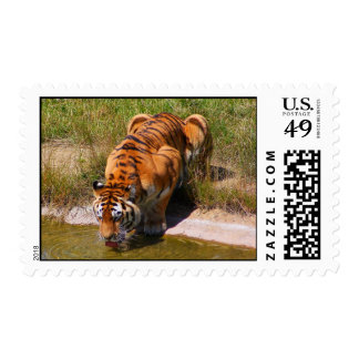 The Water Hole Postage
