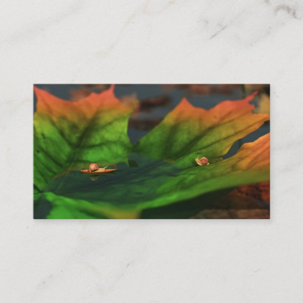 The Water Is Wide Bookmarks Business Card