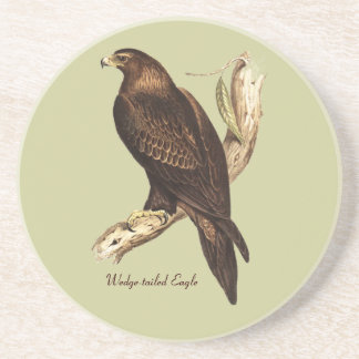 The Wedge Tailed Eagle. A Magnificent Bird of Prey Coaster