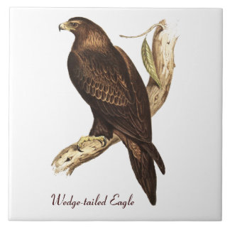 The Wedge Tailed Eagle. A Magnificent Bird of Prey Ceramic Tile