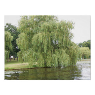 The Weeping Willow Poster