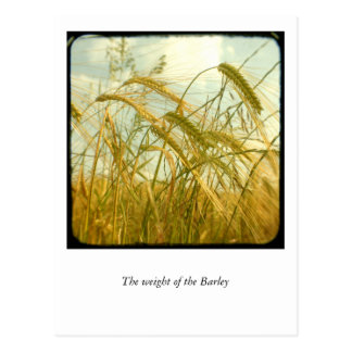 The weight of the Barley Postcard
