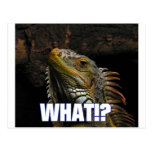 The What!? Iguana Postcard