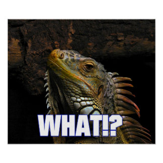The What!? Iguana Poster