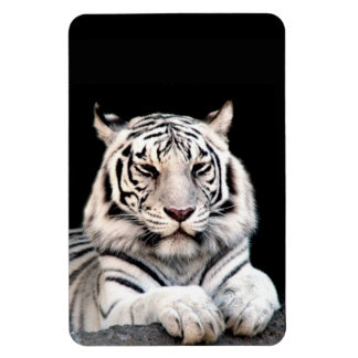 The White Bengal Tiger Vinyl Magnets