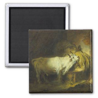 The White Bull in the Stable (oil on canvas) Magnet