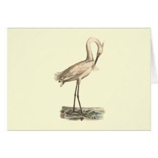 The White-crested Heron(Ardea candidissima) Card
