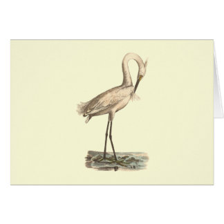 The White-crested Heron(Ardea candidissima) Greeting Card