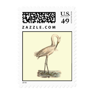 The White-crested Heron(Ardea candidissima) Postage