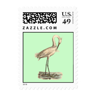 The White-crested Heron(Ardea candidissima) Postage Stamp