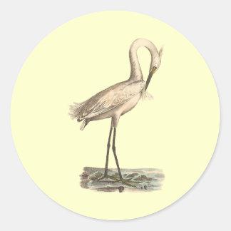 The White-crested Heron(Ardea candidissima) Sticker