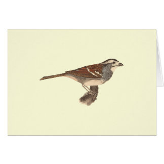 The White-crowned Sparrow(Fringilla leucophrys) Greeting Card