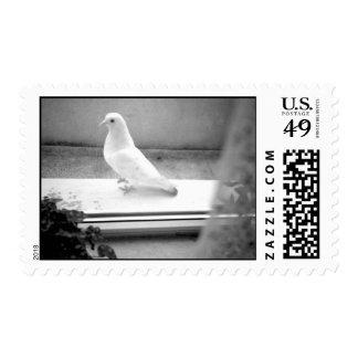 The White Dove Postage
