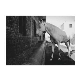 the WHITE HORSE of AMRITSAR Canvas Print