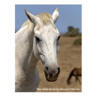 The white horse postcard