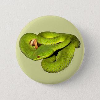 The white-lipped pit viper pinback button