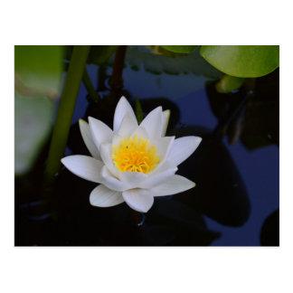 The White Lotus Card