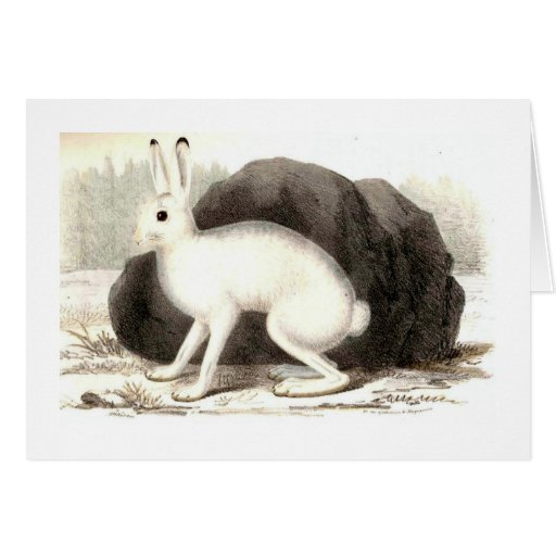 The White Rabbit Cards