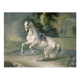 The White Stallion 'Leal' en levade, 1721 Postcard