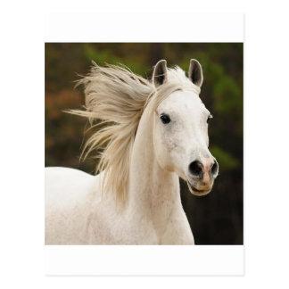 The White Stallion Post Cards