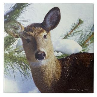 The White-tailed deer (Odocoileus virginianus), Tile
