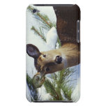 The White-tailed deer (Odocoileus virginianus), iPod Touch Case-Mate Case