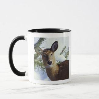 The White-tailed deer (Odocoileus virginianus), Mug