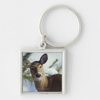 The White-tailed deer (Odocoileus virginianus), Silver-Colored Square Keychain
