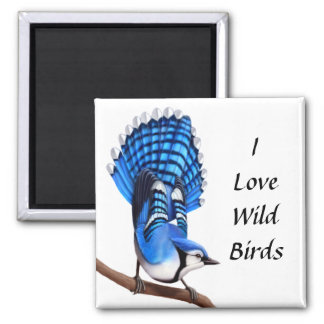 The Wild Blue Jay Bird Magnet
