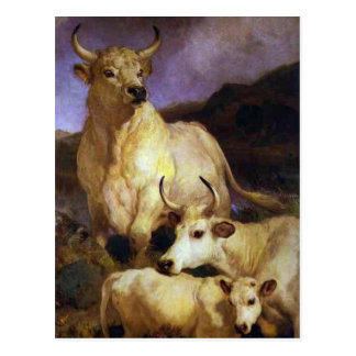The Wild Cattle of Chillingham by Edwin Henry Land Postcard