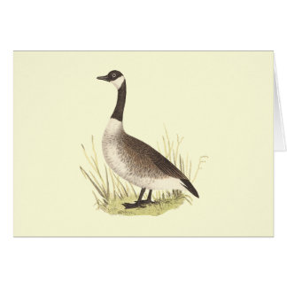 The Wild Goose(Anser canadensis) Greeting Card