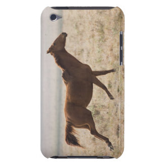 The wild horse (Equus ferus) is a species of the 2 iPod Touch Case